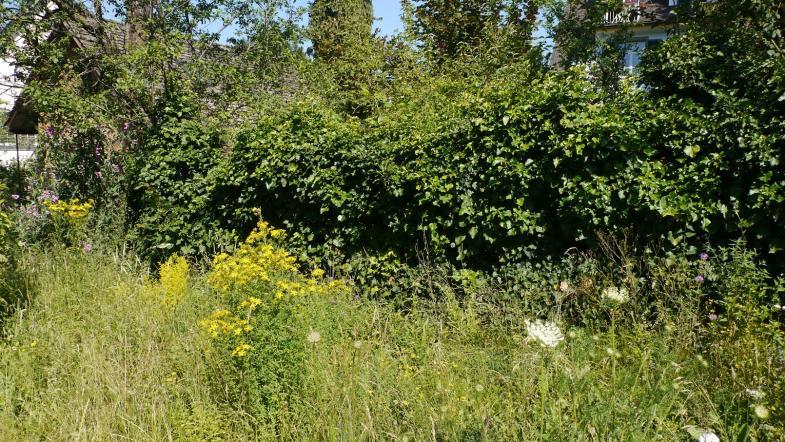 Naturgarten mit gelben Blumen