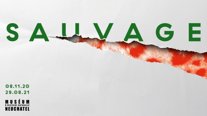 """Affiche de l'exposition temporaire """"Sauvage"""" au Muséum d'histoire naturelle Neuchâtel"""