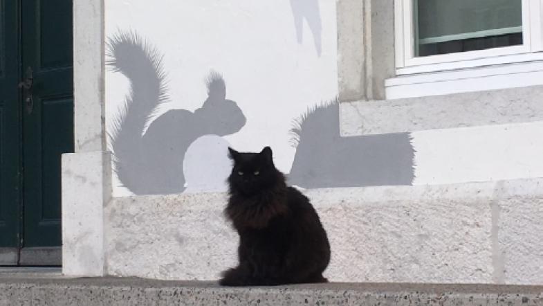 Eine schwarze Katze sitzt vor dem Naturmuseum
