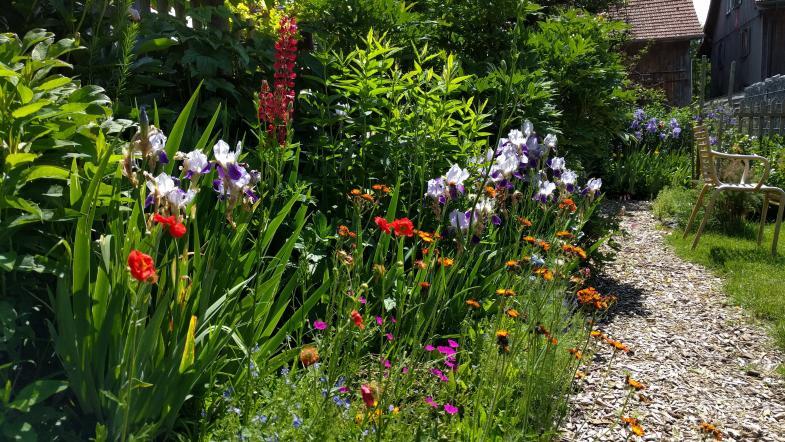 Gartenpflanzen blühen neben Wildpflanzen