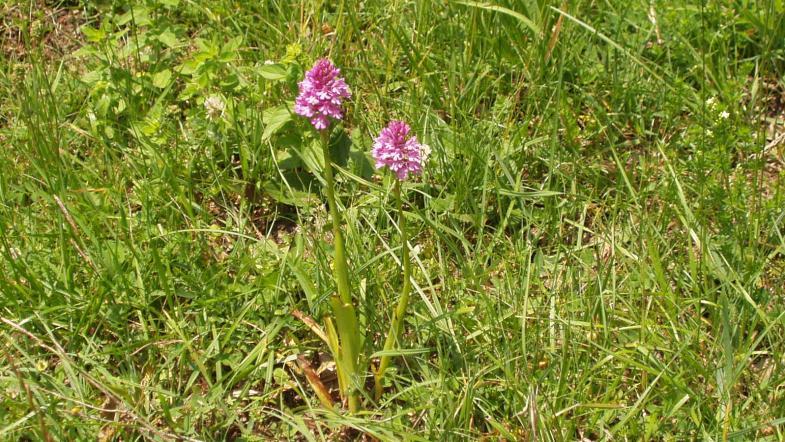 Photo d'une orchidée