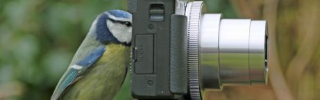 Blaumeise mit Kamera