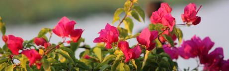 Blumen vor unscharfem Hintergrund