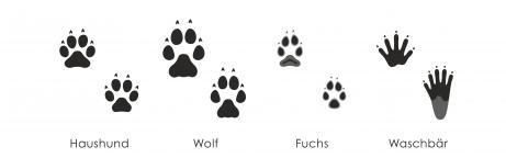 Spuren heimischer Säugetiere