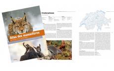 Parution de l'Atlas des mammifères de Suisse et du Liechtenstein