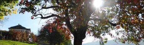 Obstbaum auf einer Wiese