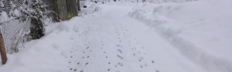 Schneespuren in einer verschneiten Winterlandschaft