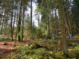 Une famille se promène dans une forêt avec des grands arbres.
