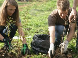Zwei Personen pflanzen kleine Heckenelemente
