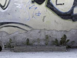 Dachs vor Wand mit Graphitis