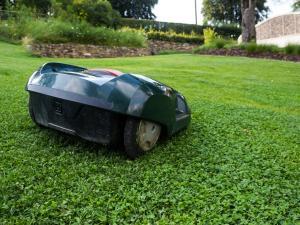 Rasenroboter auf dem Rasen