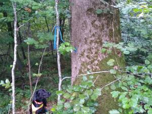 Hund sitzt in einem Wald vor einem Baum