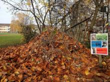 Ein Asthaufen mit einer schützenden Blätterschicht